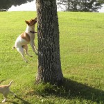 Loretta-Jumping